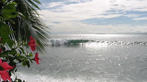 panama surf emily peeling